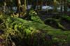 Forest Floor, Mount Field, Tasmania