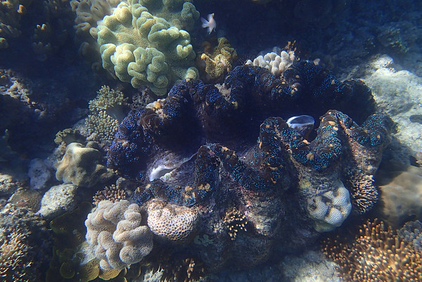 e-Scape to the Great Barrier Reef